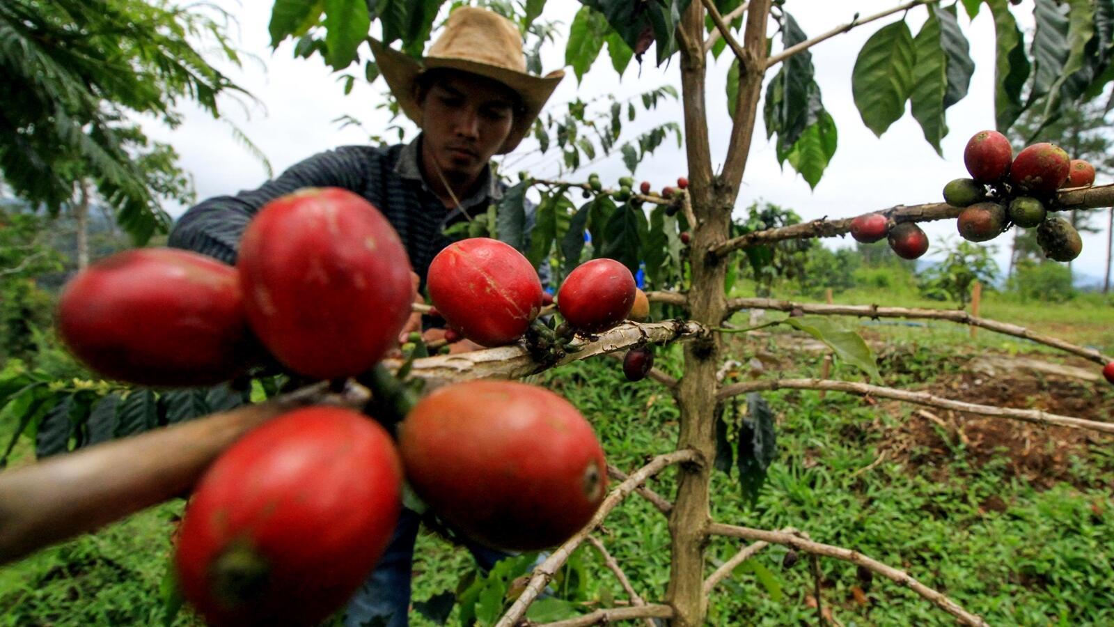 Janji Airlangga Hartarto Bantu Industri Kopi Nusantara
