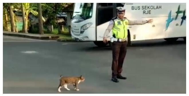 Netizen puji polisi di Muba bantu kucing menyeberang jalan raya