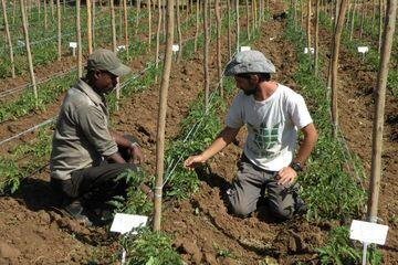 Berkat Teknologi Canggih Israel, Etiopia yang Miskin Jadi Surga Pertanian nan Makmur!