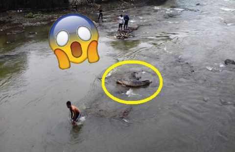 HEBOH!!!.raksasa Air Sungai Di Temukan,panjangnya Mengejutkan