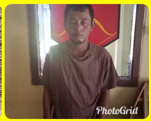 Karyawan BUMN Tertangkap Curi Buah Sawit Milik PTPN VII