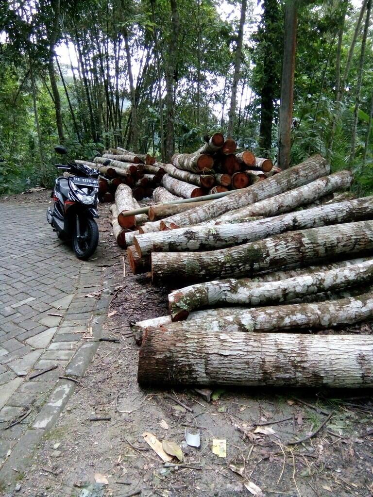 Butuh investor usaha kayu