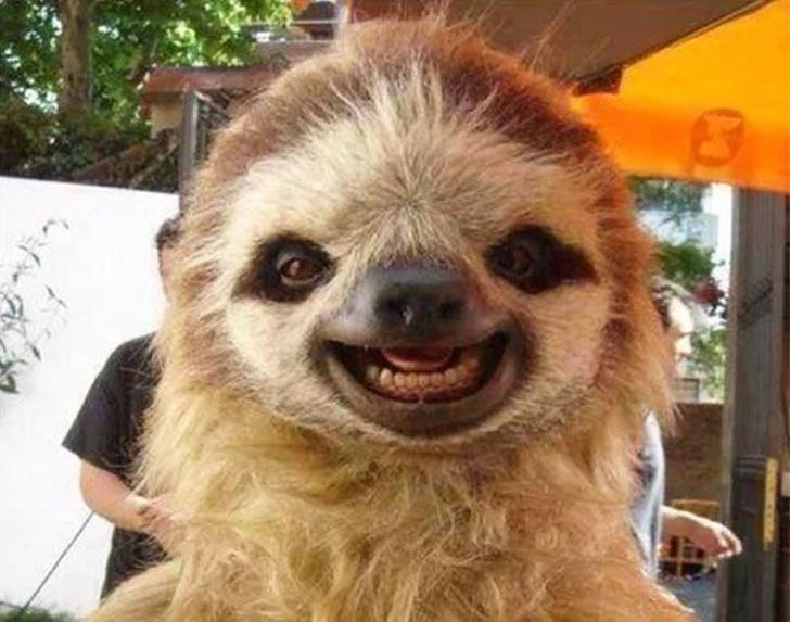 Lihat Deh Lucunya Hewan-Hewan Ini Ketika Tersenyum, Bikin Gemas