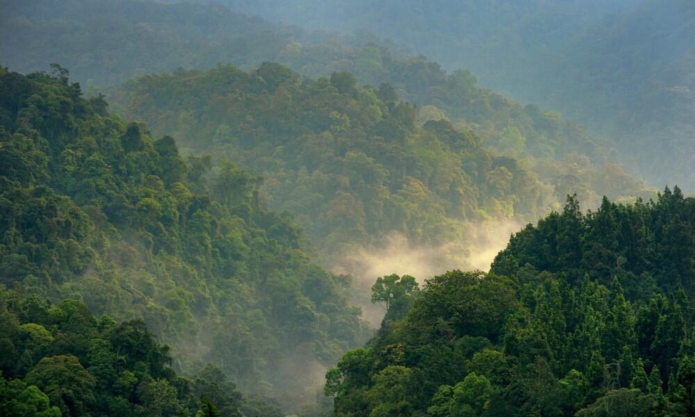 [COC GL] Silahkan Rusak Semua Hutan Biar Indonesia Makin Mengerikan