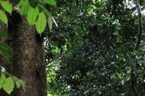 [COC GL] Melestarikan Ekosistem dan Keanekaragaman Hayati dan Stop Eksploitasi