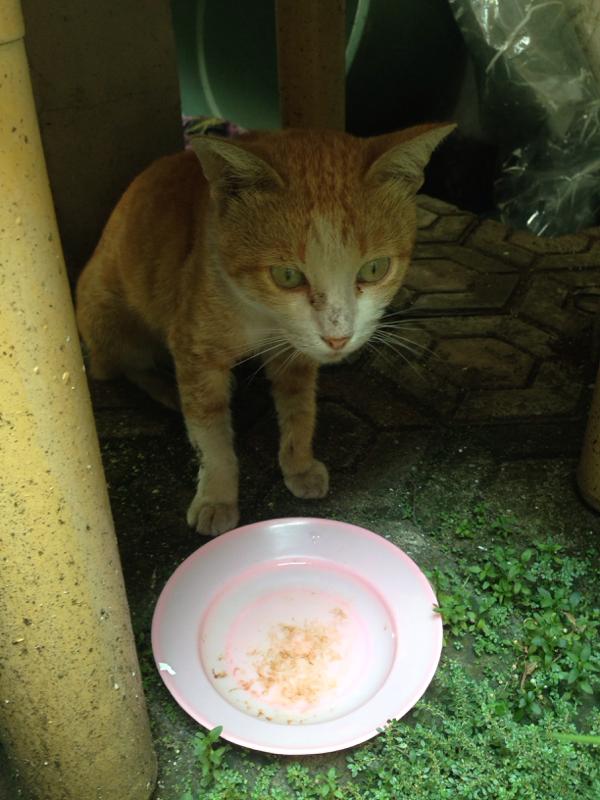 HELP! Terawang Kucing Kesayangan Ane, Gan :(