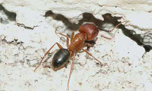 Udah Diusir, tapi Serangga Selalu Balik Lagi? Bisa Jadi Ada Retakan di Dinding