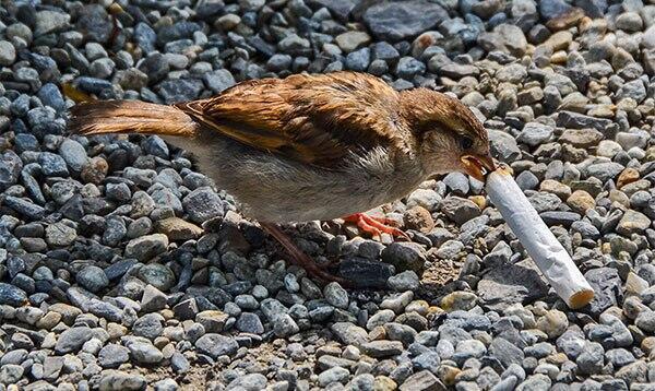 [COC GL] Dampak Rokok Terhadap Lingkungan. Merokoklah Pada Tempatnya!