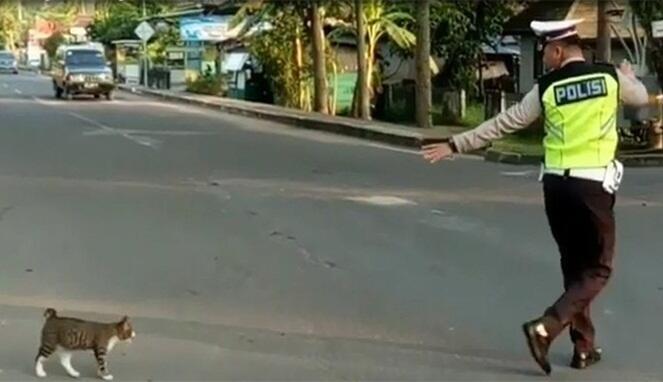 Ini Lho Sosok Si Polisi Baik Hati di Balik Video Seberangkan Kucing yang Viral