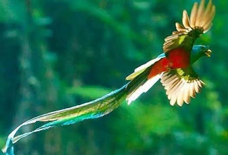 Unduh 78+ Gambar Burung Langka Terbaru Gratis