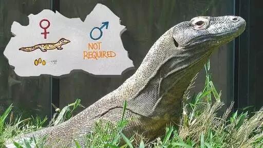 Tanpa Seks!, 45 Wanita Ini Hamil Dalam Kondisi Perawan!