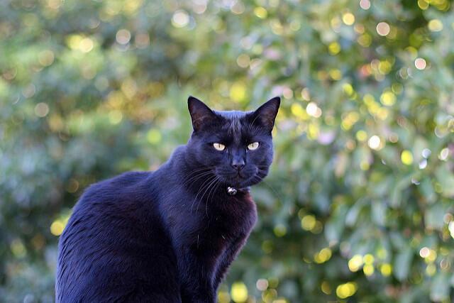 Mitos dan Kebenaran apabila Menabrak Kucing menurut Ajaran Islam