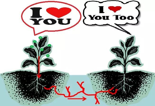 Ketika Pohon Saling 'Berbicara'