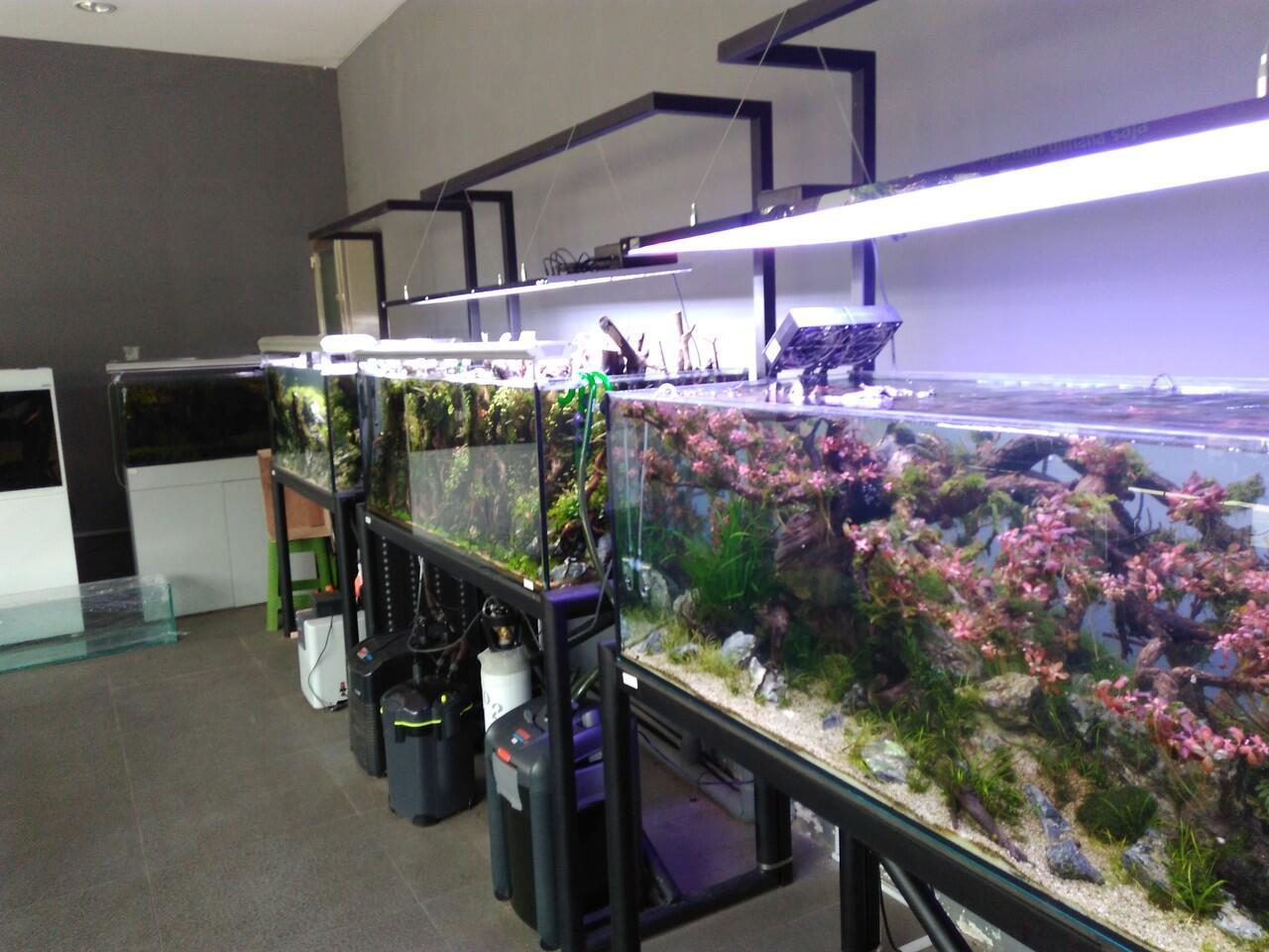 Loker wanita untuk sales toko aquariun