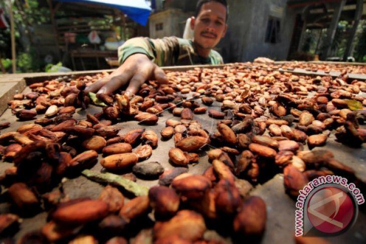 Periode Juni 2018: Harga Referensi CPO Turun, Biji Kakao Menguat