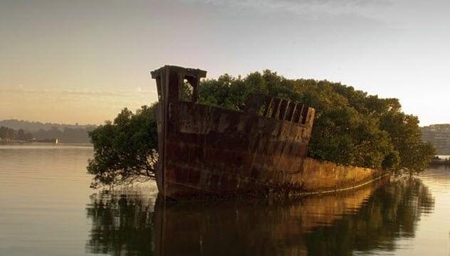 [#CUCIMATA] Tempat terbengkalai ini jadi indah setelah diambil alih oleh alam.