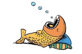Kenapa Ikan Matanya Melotot !! Apa Ikan Tidak Tidur ?