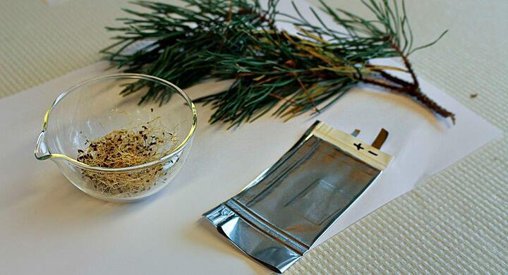 Baterai Getah Pinus yang Ramah Lingkungan