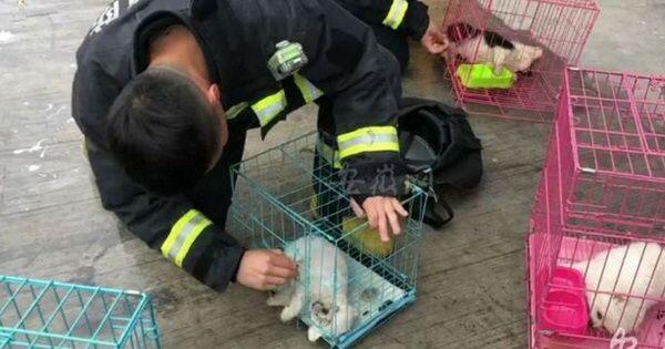 Terharu, Puluhan Kucing dan Anjing Berhasil Selamat dari Kebakaran