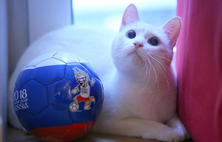 Achilles Si Kucing Peramal Pada Piala Dunia 2018 Di Rusia Kaskus