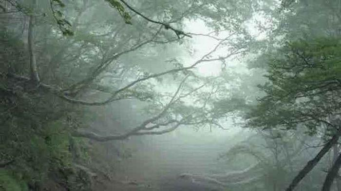 Mitos Hantu Yurei Di Hutan Bunuh Diri Aokigahara