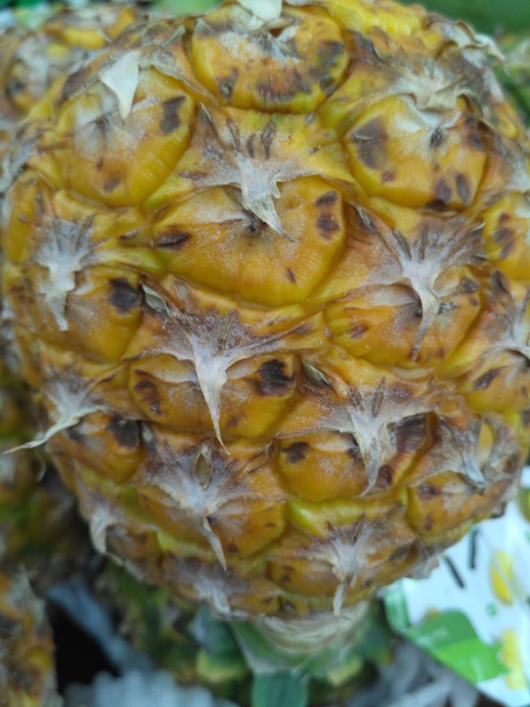Nutrisi Dalam Buah Mangga, Nanas, Melon Dan Semangka
