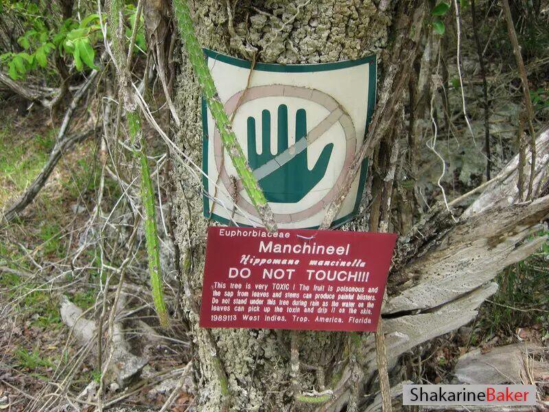 Jika Sobat Melihat Pohon Ini,Jangan Pernah Menyentuhnya!
