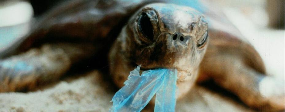 World Ocean Day 2018, Yuk Kita Jaga Kelestarian Laut dari Polusi Plastik