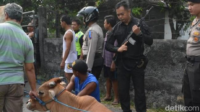 Ngamuk, Polisi Tembak Kaki Sapi di Solo