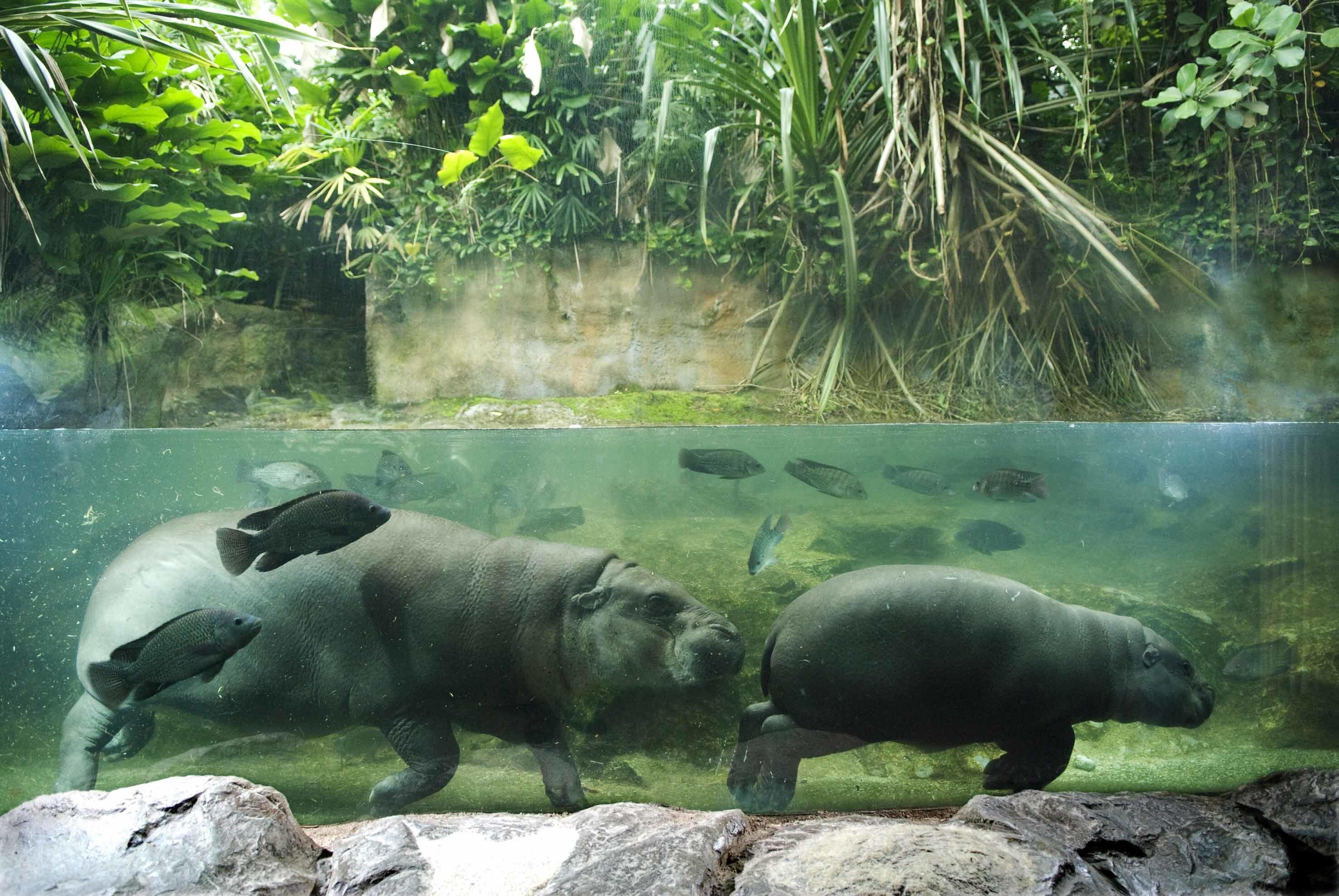 Hadirkan Wisata Malam di Tengah Hutan, Singapore Zoo Jadi Makin Seru!