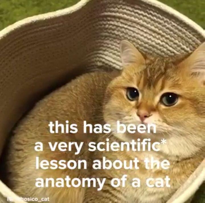 Anatomi Ilmiah Tubuh Kucing (Versi Ngakak 😂)