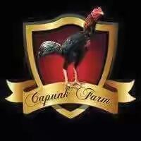 Koleksi Ane Nih Gan, Koleksi Ayam Laga !!