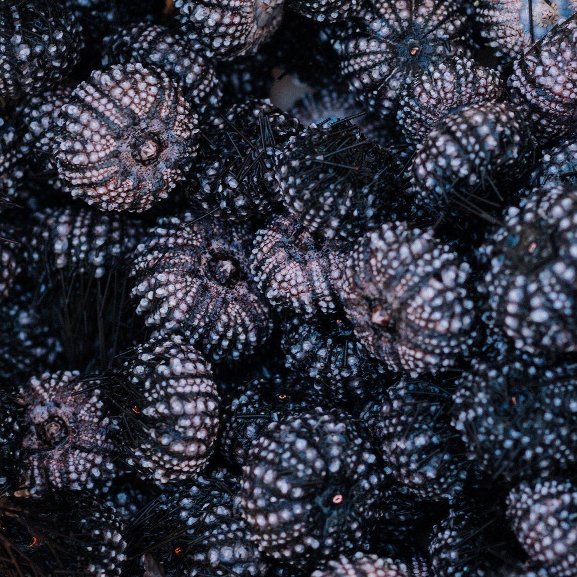 7 Seafood Mentah di Wakatobi yang Unik Banget, Dijamin Ketagihan Deh!
