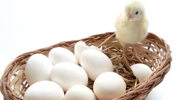 Aneh Tapi Nyata, Ratusan Telur Menetas Di Tempat Sampah