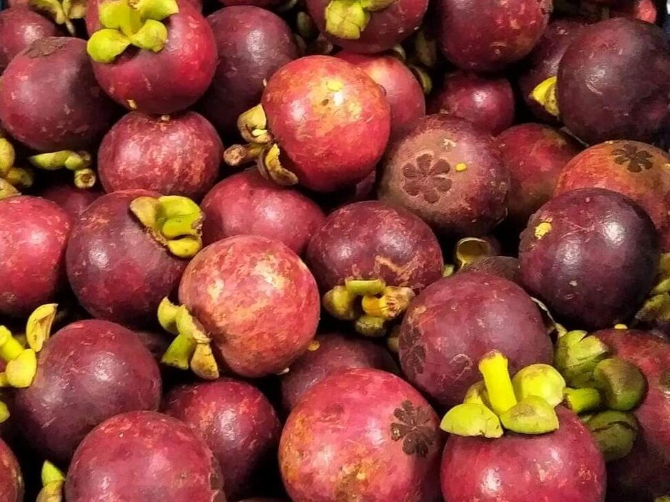 Cari Manggis Kualitas Export