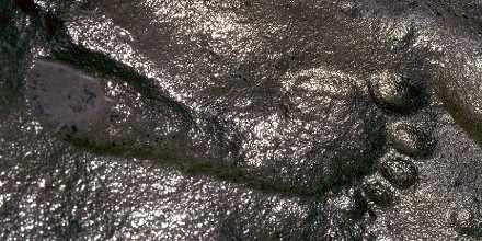 Ilmuwan bingung,bagaimana ada jejak kaki manusia berusia 290 juta tahun?