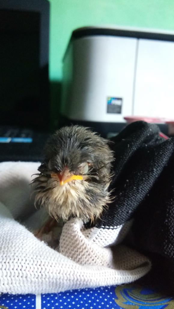 Tolong Bantu Ane Gan Mengenali Nama Jenis Anak Burung