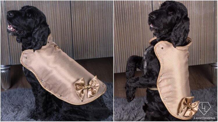 DOGGY ARMOUR! Jaket Berlapis Emas dan Berlian Seharga 1,8M Buat ANJING!