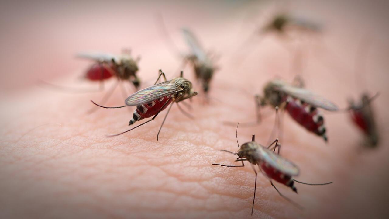 Oh, Ini Lho Alasannya Kenapa Kamu Sering Digigit Nyamuk!