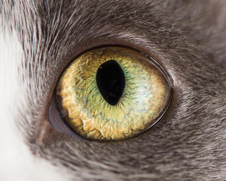 (18+ pic) Potret Keindahan Mata Kucing Yang Tak Terduga. SO SATISFYING!