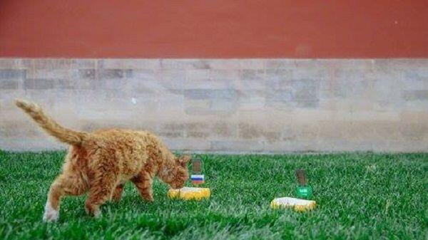Piala Dunia 2018 Belum Usai, Kucing Peramal di Beijing Tutup Usia