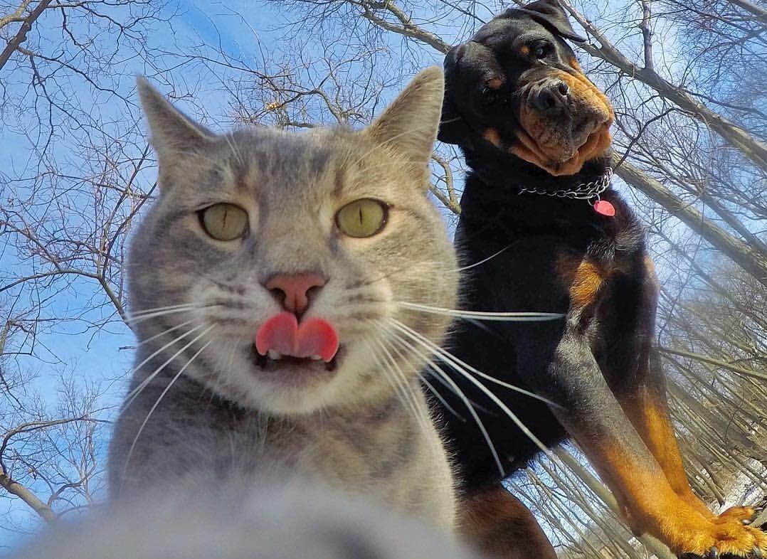 Kucing Menggemaskan Versi Ane, lanjutan!