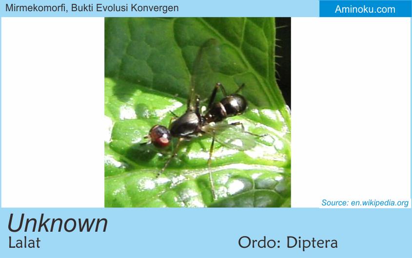 Hewan-hewan Arthropoda Yang Mirip Semut