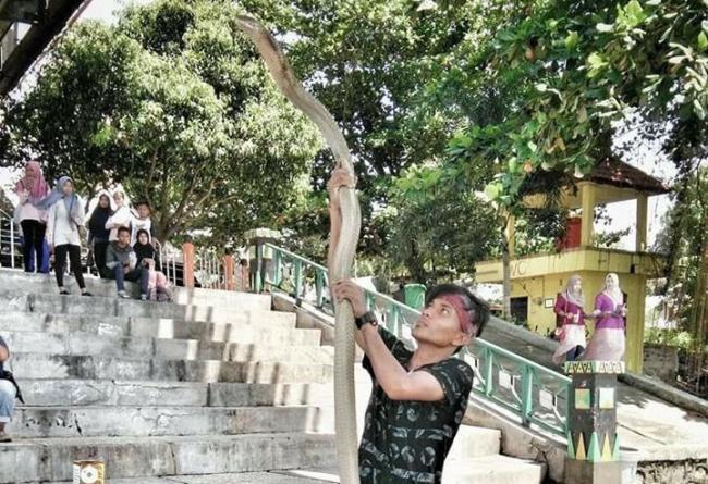 Yakin Mati Suri, Keluarga Pemuda Tewas Dipatuk King Cobra Jalani Ritual Ini
