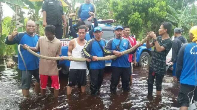 Rizki Ahmad Meninggal Dunia Usai Dipatuk King Kobra