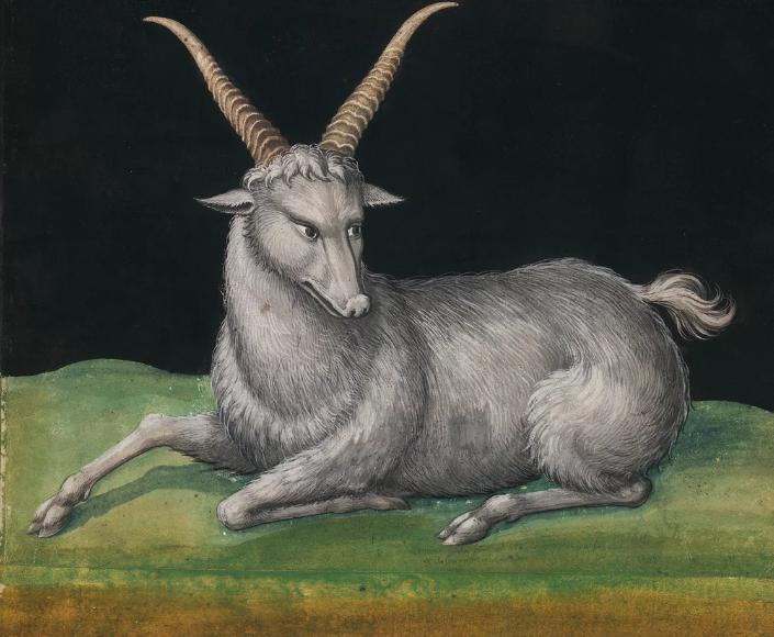 Lukisan Hewan Abad ke 16 dari Cat Air