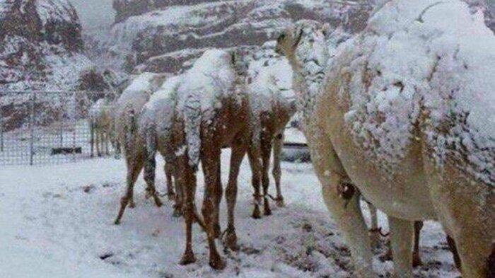 Salju Turun Di Arab? Beberapa Fenomena Aneh yang Pernah Terjadi Di Dunia!