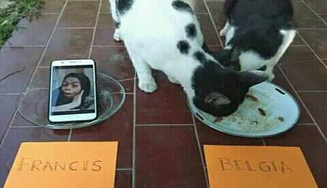 Saat Kucing dan Ayam Jadi Pemrediksi Piala Dunia, Hasilnya Bikin Ngakak