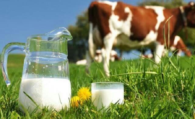 Saat Susu Bukan Lagi Susu, Lalu Apa Lagi?