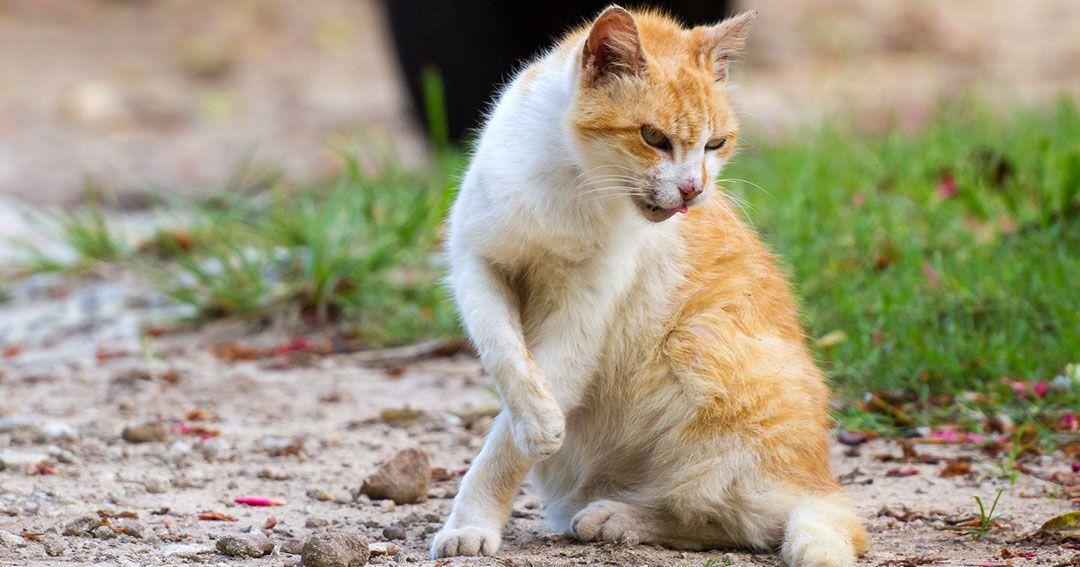 Mengenal Lebih Jelas Penyakit Rabies yang Bukan Hanya dari Anjing